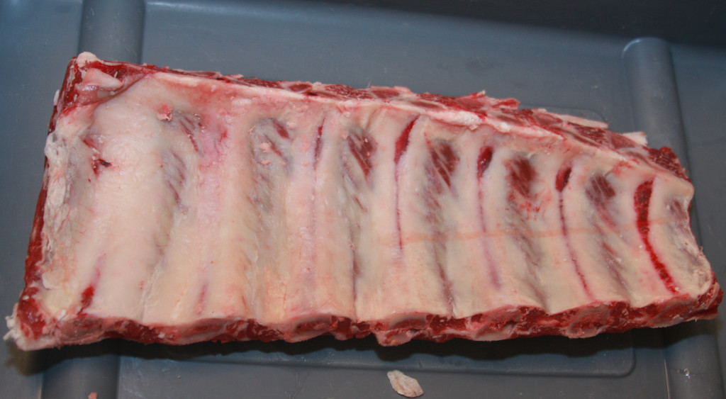 124 Beef Rib Back Ribs (medial view) 2